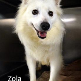 Zola-St. Louis, MO